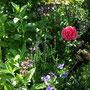 Kräuterbeet mit Blumen