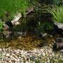 Mein Teich ...