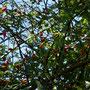 Da sieht man mal, wie viele Wildrosenblüten ich hatte ...