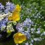 Blumensträußchen vor Vergissmeinnicht