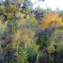 coume del vent, octobre 2012