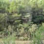 """bordure de la parcelle, """"la forêt penchée"""""""