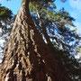 Bomen groeien hier tot in de hemel