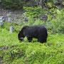 Als extraatje een mooie Black Bear