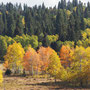 De herfstkleuren beginnen al te komen
