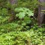 Mooie begroeiing in het Oerbos