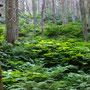 Prachtige vegetatie onder de reuzen