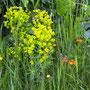 Lieve bloempjes langs de weg