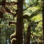 Bijzonder begroeide bomen