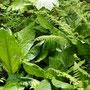 Fris groen in het oerbos