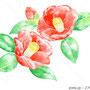 椿 イラスト 透明水彩