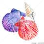貝殻イラスト ペン 透明水彩