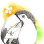 オオハシ イラスト ペン画 水彩