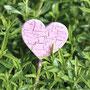 Mitten im Bohnenkraut ein rosa Crackle-Herz