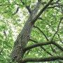 Nußbaum - Attnang