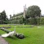 Barockgärten auf der Isola Bella mit Pfau