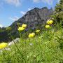 Trollblumen auf der Grabneralm