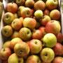 Goldparmene-Apfel