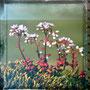 Flore arctique. (Plaque ancienne)