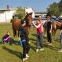 Pferde ausladen