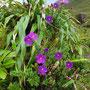 Dezente Blüten im satten Grün