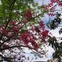 Blütenpracht im November