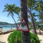 Gefahr Kokosnuss