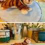 羊毛の猫ちゃん