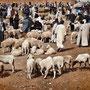 Mercato settimanale degli ovini, Bouarfa - Marocco