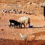Bouarfa - Marocco