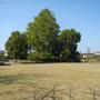 玉虫を採った東公園城跡、野球をした公園