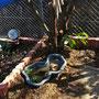 花壇内に設置、植物に囲まれたひょうたん池に仕上げます