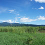 湿地の中に潜んでいた葦や蒲に覆われたポンド