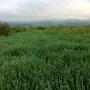 湿地と化した元の干潟