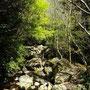 始まった渓の新緑