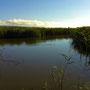 早朝の、元々の干潟が湿地となってその中にできた湿地沼