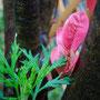 既存樹木の若葉