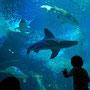 大きなサメを怖々見入る