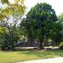 木登りをして遊んだ西公園の木、坂本画伯の銅像