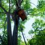 休憩場所の木陰確保