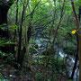 天然林の生い茂る谷間を流れる渓流