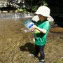 川魚を観察する(カワムツ)