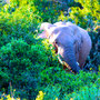 Donnerstag, 02.06.2016: Ehrlich, Klippschliefer sind die nächsten Verwandten des Elefanten.