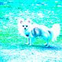 Freitag, 19.08.2016: Hunde sollten nie so klein sein, dass sie beim Sockensortieren in der Schublade landen.