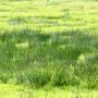 Mittwoch, 13.04.2016:  Das Gras  wird gebeten  über die  Sache  zu wachsen,  das  Gras, bitte!