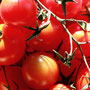 Dienstag, 12.07.2016: Wenn du dich langweilst, leg doch mal im Drogeriemarkt eine Spur aus Tomatensaft von der Kundentoilette zum Tampon-Regal.