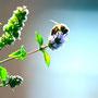 Montag, 22.02.2016: Wer Blumen pflückt, klaut anderen die Nahrung.