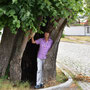 1000 jähriger Lindenbaum