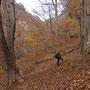 11月 吾妻渓谷のトチノキの巨樹 東吾妻町