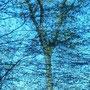 """fotografie aus der serie """"bäume"""""""